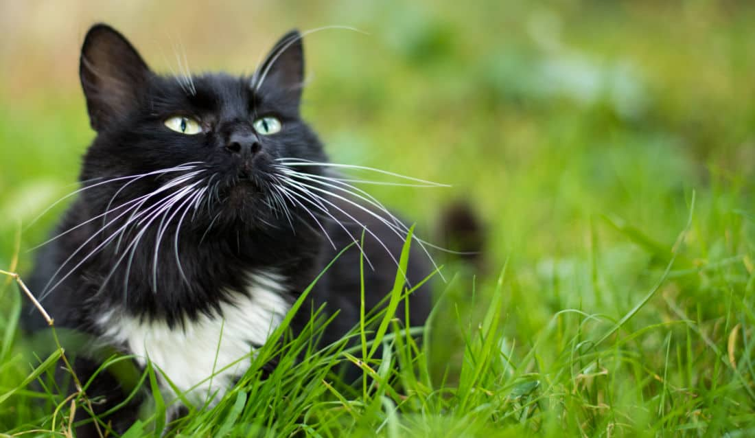 Cat with Long Whiskers