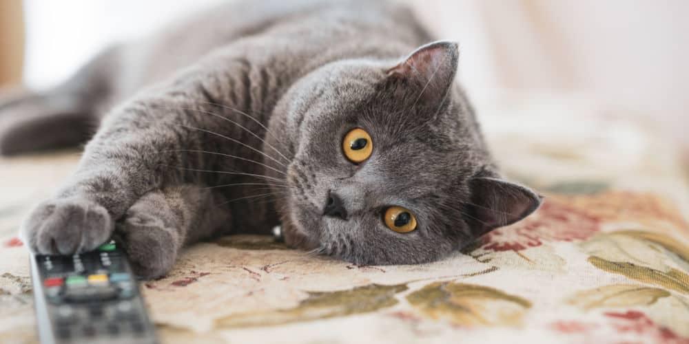 Do Cats Like Watching TV