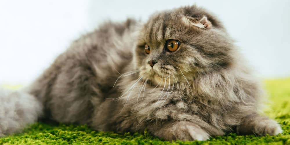 Cat with Matted Fur
